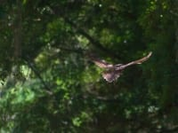 owl-cropped-1280x8531