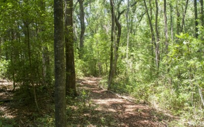 Outdoor - Wilderness Trail