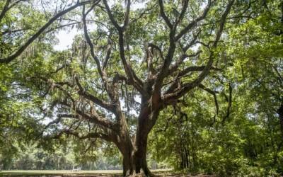 Outdoor - Chapel Oak